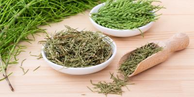 What is Horsetail and Should I Take it-Resized